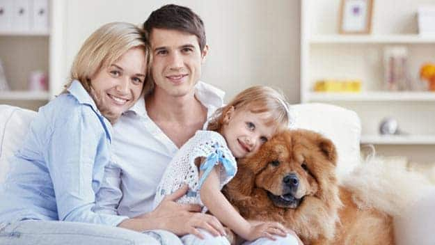 Wills & Trusts dog-young-family Direct Wills Nantwich